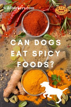 Can dogs eat spicy food? No, dogs should not eat spicy food. Spicy foods can cause a variety of problems for dogs. Spices can cause stomach issues like diarrhea, vomiting, and pain. The spiciness may also lead your dog to be extra thirsty, leading to other health issues like dehydration. In extreme cases, digesting spicy foods can be fatal to dogs. What should I do if my dog ate something spicy? First, check if there is anything toxic in the spicy food your dog ate.If there was something… Can Dogs Eat, Dog Eating, Spicy Recipes, Safe Food, Your Dog, Spices, Cases, Foods, Canning