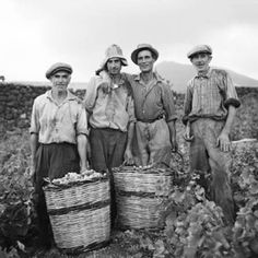 Mid-September means it's vendemmia and wine-making time, which is delicious in Calabria on more than one front. Vintage Italy, Vintage Wine, Vintage Farm, Vintage Photographs, Vintage Images, Italian Vineyard, In Vino Veritas, Wine Country, Old Photos
