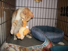 Playful Rusty
