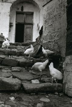 photography by Esther Bubley, 1954, in Matera, Italy