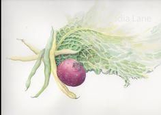 Green bean composition