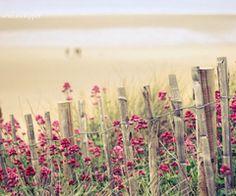 Imagenes vintage gratis para fondo celular en hd hd wallpapers оригиналы, ф Dog Urns, I Believe In Pink, Hollyhock, Retro Wallpaper, Pink Summer, Pink Beach, Everything Pink, My Favorite Color, Cute Wallpapers