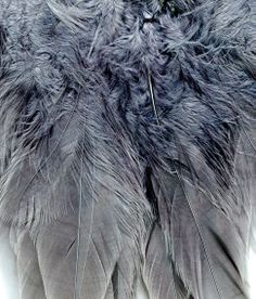 feathers and fur textures