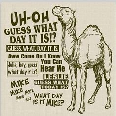 30 Best Hump Day Images Camels Camel Hilarious