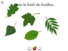 La forêt-Mes premières découvertes par Gallimard Jeunesse