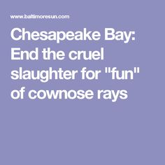 """Chesapeake Bay: End the cruel slaughter for """"fun"""" of cownose rays"""