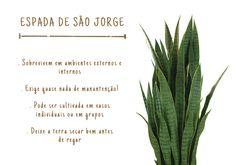 décor com plantas