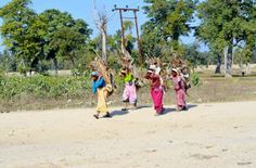 Nepalese women carrying firewood to cook Dal Bhat. Photo taken near Indian Nepalese border point at Banbasa Mahendranagar in the far west of Nepal.