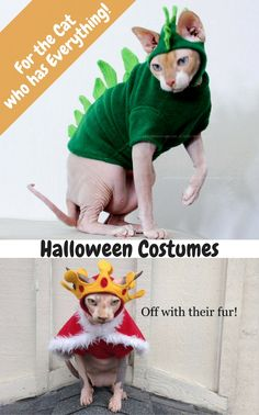 This Etsy store has the cutest cat costumes!  I love the look on the face of the cat wearing the crown! SimplySphynx also has other cat clothes.  Love it!!  Cat halloween costume | clothes for cats | Cats #halloween #ilovecats #affiliatepin