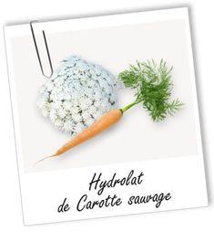 Hydrolat Carotte sauvage BIO Aroma-Zone
