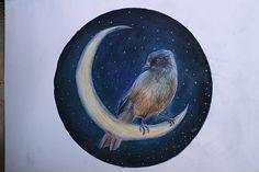kuukkeli siperian jay  magical bird  lapland   arctic
