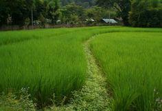 Fern resort Thailand