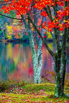 wowtastic-nature: Colors of Fall Blur Background Photography, Light Background Images, Studio Background Images, Photo Background Images, Background Images Wallpapers, Nature Photography, Watermark Photography, Photography Lighting, Photography Courses