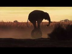 ▶ Save Elephants from Abuse in 30 seconds - YouTube
