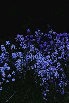 Dark Wallpaper, Flower Wallpaper, Iphone Wallpaper, Flower Aesthetic, Blue Aesthetic, Lock Screen Backgrounds, Moon Garden, Science And Nature, Cute Wallpapers