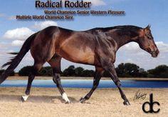 Radical Rodder