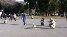 People in Ueno Park, Tokyo, loved seeing two DOGs and couldn't get enough selfies and snaps. Wait until hundreds of them are exhibited in the main installation. Ueno Park, Dog Sculpture, Two Dogs, Japanese Artists, Public Art, Installation Art, Selfies, Tokyo, London