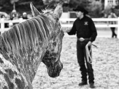 Show with Horse