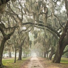 Boone Hall Plantation in Charleston S.C. The Movie The Notebook was filmed here.