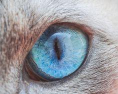 Fotógrafo faz fotos em close-up de olhos de gatos, por Andrew Marttila. (2)