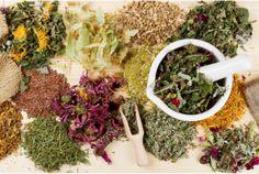 7 Popular Medicinal Herbs