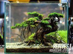 """1,988 Me gusta, 3 comentarios - Aquascape (@aquascapenl) en Instagram: """"Awesome bonsai scape ------------------------------------------------ #aquascape #aquarium #aqua…"""""""