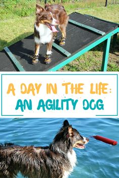 1000 images about bestbullysticks healthy dog blog on. Black Bedroom Furniture Sets. Home Design Ideas