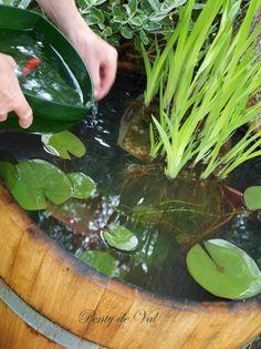 Mini fish pond