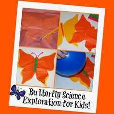 Butterfly Craft and Science Exploration for Kids!