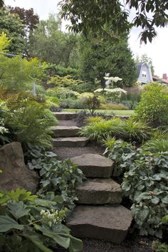 Basalt stairs ascend a shady hillside to a sunny, rectangular lawn in this Salem, Oregon garden.