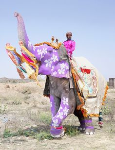 """More elephant cruelty for the purpose of entertainment.  This should not be a celebrated festival! """"Seeing the Mistreatment of Elephants in India Was Haunting"""" http://www.huffingtonpost.ca/sangita-iyer/animal-cruelty-elephants_b_4536577.html  Supreme Court Warns Against Cruelty Toward Animals During Festivals: http://www.ndtv.com/india-news/supreme-court-warns-against-cruelty-toward-animals-during-festivals-762722  Do not support these festivals with your tourism dollars."""