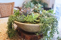 "Found a wooden ""saucer"" at HomeGoods for my succulent centerpiece"
