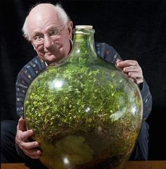 Thriving Garden in Sealed Bottle Hasn't Been Watered in Over 40 Years - My Modern Metropolis