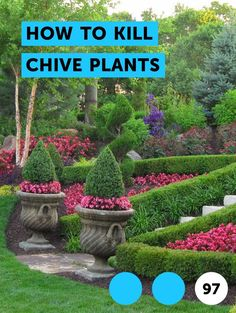 How to Kill Chive Plants. Chives are among the hardiest of plants. Though they