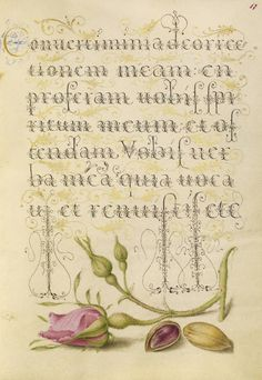 [folio 17r] Joris Hoefnagel (illuminator) [Flemish / Hungarian, 1542 - 1600], and Georg Bocskay (scribe) [Hungarian, died 1575], French Rose and Pistachio, Flemish and Hungarian, 1561 - 1562; illumination added 1591 - 1596, Watercolors, gold and silver paint, and ink on parchment, Leaf: 16.6 x 12.4 cm (6 9/16 x 4 7/8 in.), 86.MV.527.17.