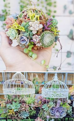 A house decorated with plants can give a beautiful and fresh feel. The majority of green plants turned out to give a good influence on one's psychological. The green color can provide a calm, peaceful, refreshing effect and harmony. Succulent Planter Diy, Hanging Succulents, Succulent Wreath, Succulent Gardening, Succulents In Containers, Hanging Plants, Succulents Garden, Indoor Gardening, Indoor Planters