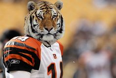 Cincinnati Bengals   What If NFL Teams Took Their Nicknames Literally: A Photoshop Investigation