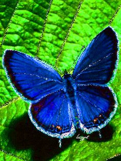 GIFS HERMOSOS: FLRES Y MARIPOSAS ENCONTRADAS EN LA WEB Butterfly Gif, Butterfly Pictures, Butterfly Wallpaper, I Wallpaper, Beautiful Butterflies, Beautiful Flowers, Beautiful Creatures, Animals Beautiful, Dragonfly Insect