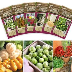 James Wong's Top 20 Seed Collection - James Wong Homegrown Revolution Seeds and Book - Vegetable Seeds - Gardening - Suttons Seeds and Plants