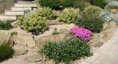 Plantas para rocallas