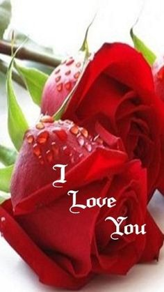 red rose i love you mom Love You Hubby, Good Night I Love You, Hope You Are Well, Cute Images For Dp, Love You Images, I Love You Quotes, Love Yourself Quotes, Hd Love, Beautiful Red Roses