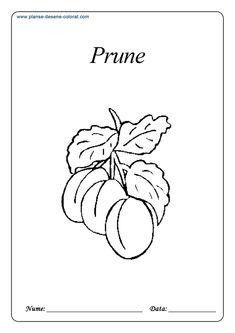 Fructe - Planse de colorat si educative Gerbil, Anaconda, Chinchilla, Amphibians, Classroom Decor, Portugal, Fruit, Plants, Coloring
