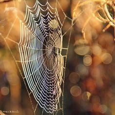 #waycoolshots #worlds_beautiful_photos #photowall #photomafia #bokeh_kings #bokeh_and_blur #princely_shotz #heart_imprint #fotocatchers #ominous_perfection #almostperfect_seasons #photografia_naturamember #ig_naturelovers #love_natura #bestnatureshot #naturehippys #nature_perfection #kings_insects #whywelovenature #nature_sultans #luontoonfi #yleluonto #ig_great_pics #everything_imaginable #loves_world