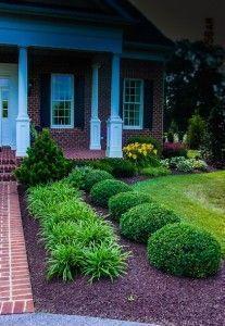 #Frontyard - Beautiful front yard round shrubs; spider plants to accent them; landscaping ideas #gardenshrubsmulches