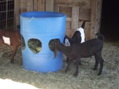 Homemade Hay Feeder for sheep or goats Goat Hay Feeder, Diy Hay Feeder, Goat Playground, Goat Shelter, Deer Feeders, Goat Pen, Goat House, Goat Care, Dwarf Goats