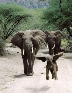 Somebody just saw Dumbo and believes he can fly.... looks like he can!