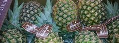 Piñas Costa Rica , www.bribrifruits.com