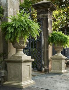 Stone urns on plinths with ferns - a great focal point for a shady corner.