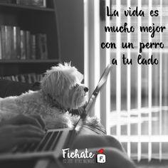 De mi perro aprendí lecciones de lealtad y amistad verdadera…  #Inspiration #Frase
