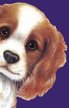 Cavalier Rescue USA - Cavaliers of the West Show to Benefit Our Group! I Love Dogs, Puppy Love, Cavalier Rescue, Country Paintings, Dog Show, Cavalier King Charles, Beautiful Dogs, Dog Art, Pet Shop